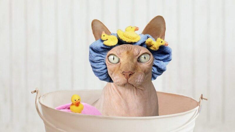 がんばってお風呂に入るネコ
